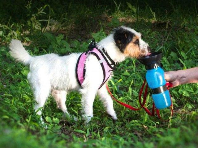 Поилка для собак Aqua Dog 537 мл Blue